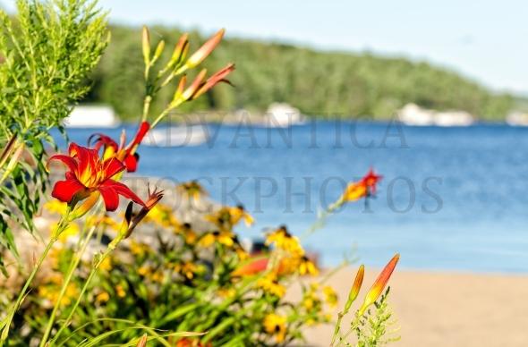 Tiger Lily At Lake Shore