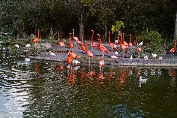 Flamingo and Ibis Birds