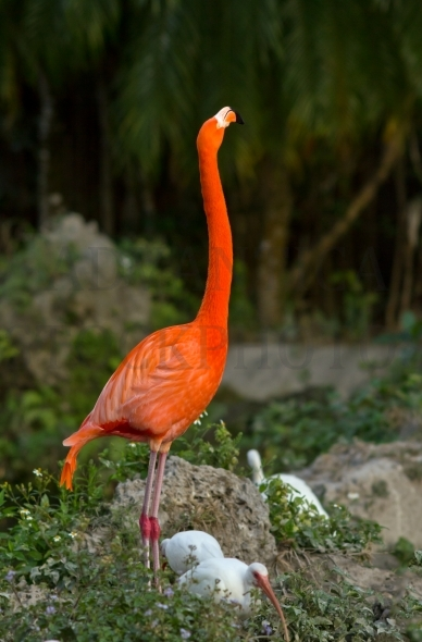 Pink / red flamingo and ibis birds