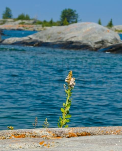 Flower on a rocky island