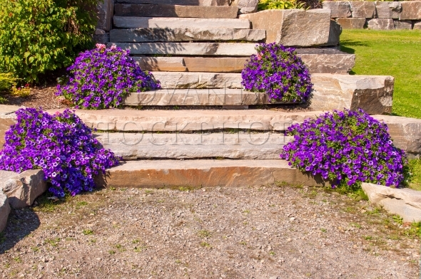 Stone slab steps and purple flowers