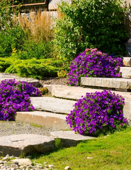 Stone path with steps, decorated with flowers