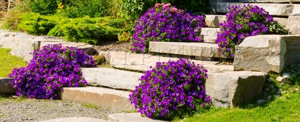 Slab Stone Steps and Purple Flowers