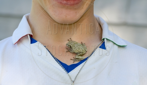 Small tree frog on boy's chest