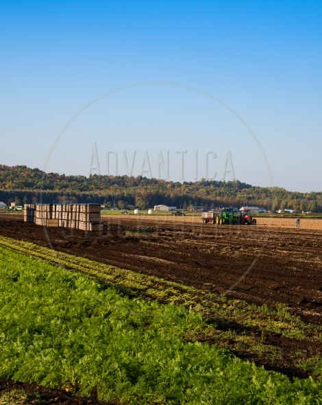 Harvest time – tractor and crates in the field