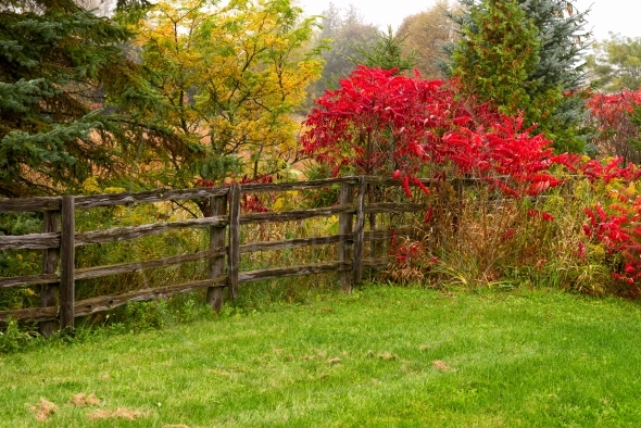 Split-rail fence under colorful trees