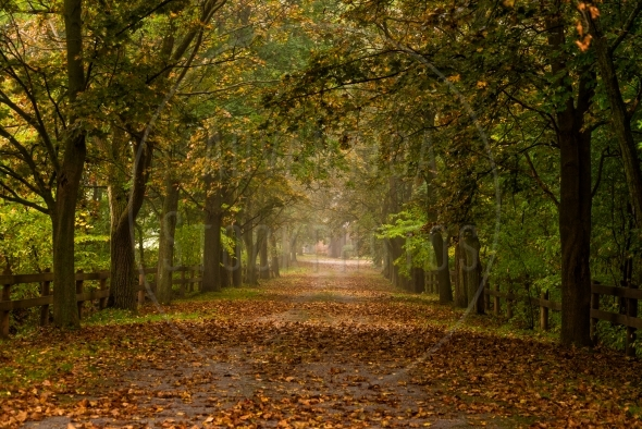 Wide tree lane in the autumn