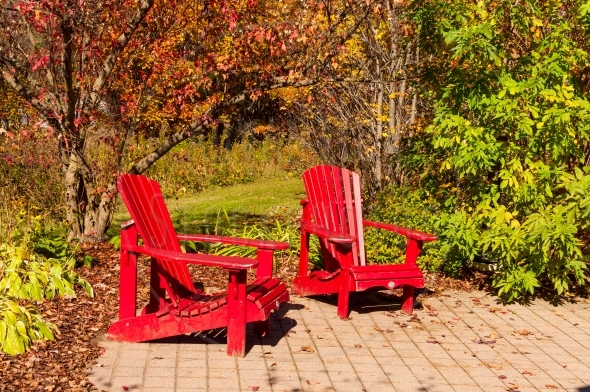 Two red chairs under a brightly colored tree