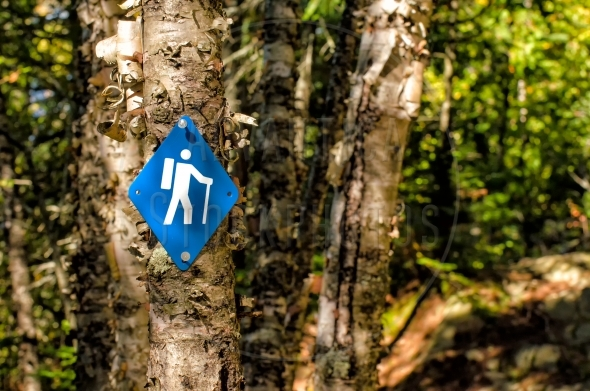Blue Hiking trail sign on a birch tree