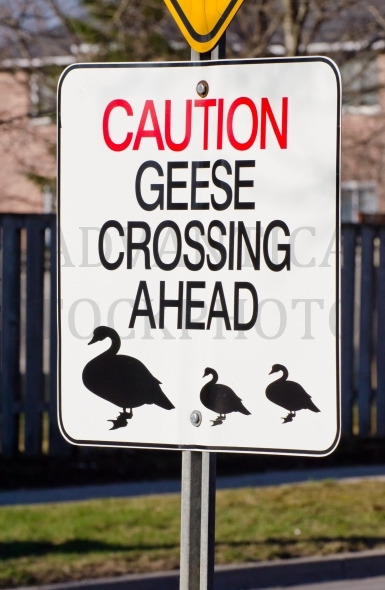 Geese Crossing Sign